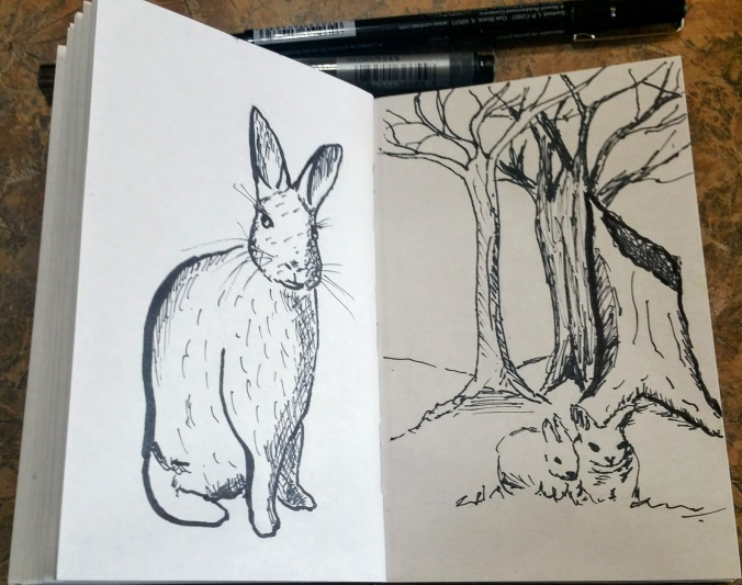 Rabbit sketches done on a lunch break.