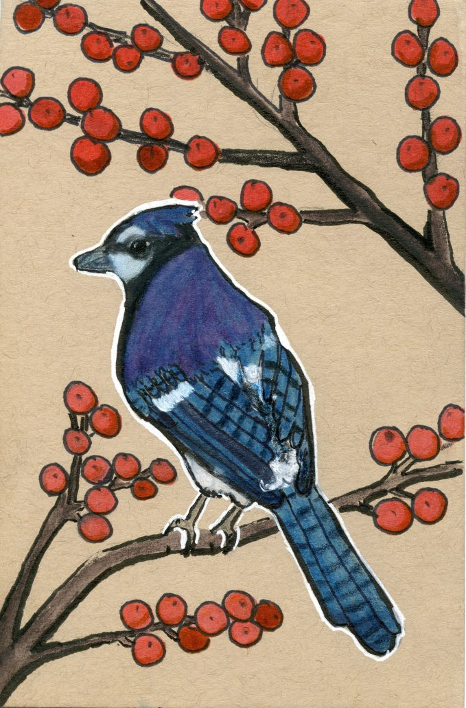 Blue Jay and Coralberry