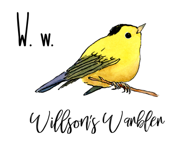 W stands for Willsons Warbler